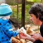 Immer wieder toll: Mit Opa die Hühner füttern.