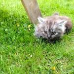Cooper macht einen kurzen Ausflug in den Garten.