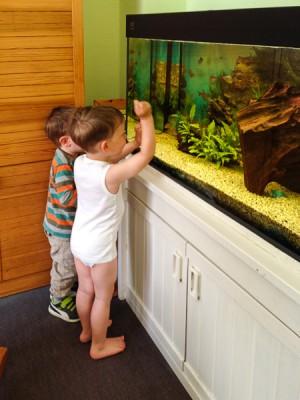 Auch Noah schaut sich die Fische gerne an, muss aber immer davon abgehalten werden, gegen die Scheibe zu klopfen. Der Schlingel!