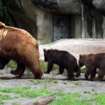 Süße Bärenfamilie