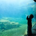 Liam findet jede Form von Aquarium faszinierend.
