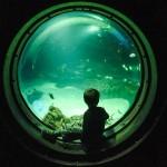 Auf den Spuren von Jules Verne