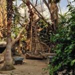 Faszinierende, halboffene Orang-Utan-Kuppel