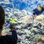 Aquarianer Liam