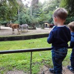Überall tolle Tiere