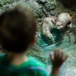 Liam bleibt bei den Ottern hängen. :)