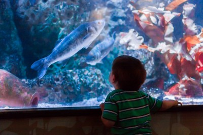 Liam ist unser Aquarianer. :D