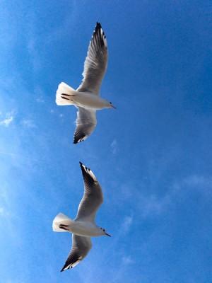 Besuch aus der Luft