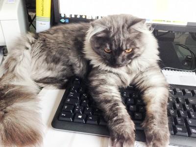 """Cooper hingegen sagt: """"Arbeiten? Heute nicht!"""" :)"""