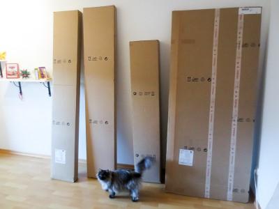 Vier große Pakete weckten das Interesse unseres Katers. :)
