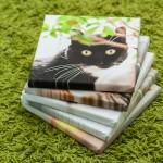 Quadratische Katzenleinwände