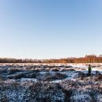 Heide im Schnee