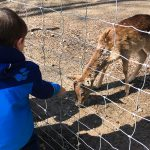 Liam liebt es, Tiere zu füttern.