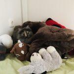 Wer findet die Katze? :)