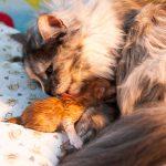 Nach und nach kamen vier gesunde Katzenbabys zur Welt.
