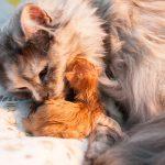 Hebamme Steffi half dabei, die ersten Lebensgeister zu wecken.