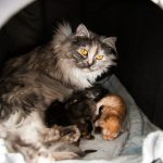 Emma hütet ihre Kinder.