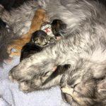 Emma und ihre vier kleinen Nachwuchsracker