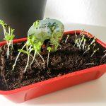 Im kleinen Garten wächst und gedeiht es.