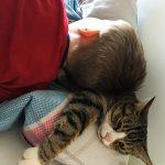 So 'ne Katze muss auch mal was aushalten. :D