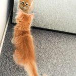 Dort lernt Red erstmal sein Spiegelbild kennen. ^^