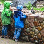 Die Jungs fanden es spannend, an viele Tiere so nah heranzukommen.
