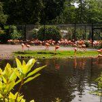 Kurz bevor wir bei den Flamingos ankamen, schlug das Wetter wieder um.