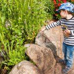 Liam entdeckt Schildkröten.