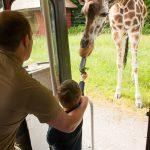 Kleines Highlight für Noah. Er darf eine Giraffe füttern. :)