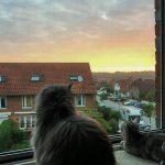 Die Katzen genießen den Sonnenuntergang